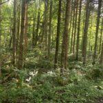 森に誘われてパート2